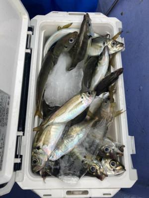 船宿 まる八の2021年6月10日(木)2枚目の写真