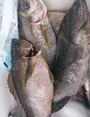 丸銀釣りセンターの2021年6月13日(日)3枚目の写真