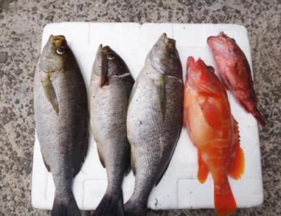 丸銀釣りセンターの2021年6月13日(日)4枚目の写真