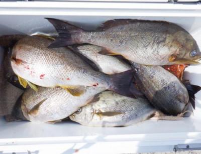 丸銀釣りセンターの2021年6月14日(月)4枚目の写真