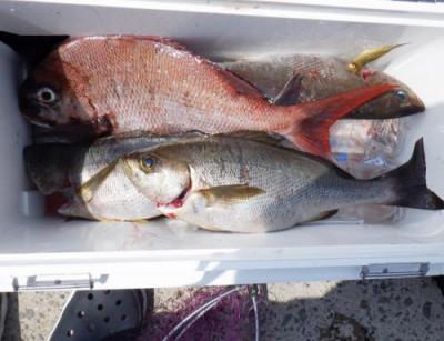 丸銀釣りセンターの2021年6月14日(月)5枚目の写真