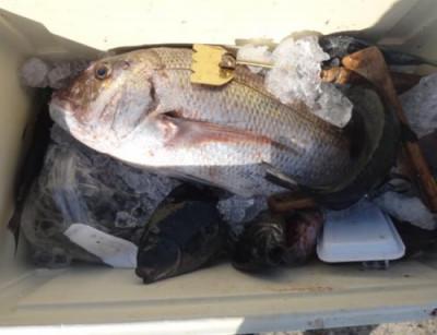 丸銀釣りセンターの2021年6月20日(日)2枚目の写真