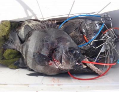 丸銀釣りセンターの2021年6月20日(日)4枚目の写真