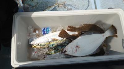 釣り船 秀進丸の2021年6月21日(月)5枚目の写真