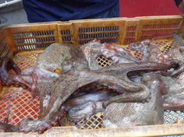奥村釣船の2021年6月21日(月)4枚目の写真