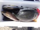 丸銀釣りセンターの2021年6月21日(月)2枚目の写真