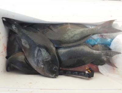 丸銀釣りセンターの2021年6月25日(金)3枚目の写真