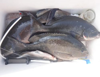 丸銀釣りセンターの2021年6月25日(金)4枚目の写真