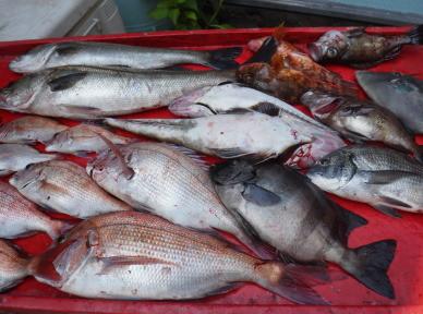 奥村釣船の2021年6月24日(木)4枚目の写真
