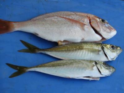 釣具の海友の2021年6月25日(金)1枚目の写真