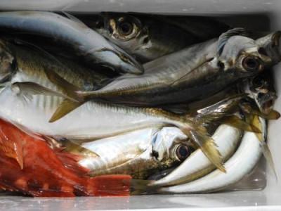 釣具の海友の2021年6月25日(金)2枚目の写真
