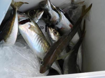 釣具の海友の2021年6月25日(金)3枚目の写真