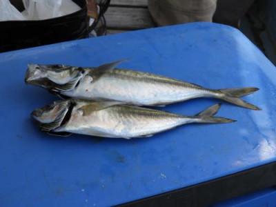 釣具の海友の2021年6月25日(金)4枚目の写真
