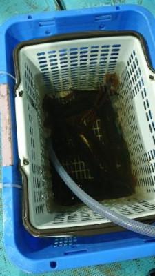 正漁丸の2021年6月26日(土)3枚目の写真