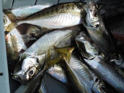 釣具の海友の2021年6月28日(月)4枚目の写真