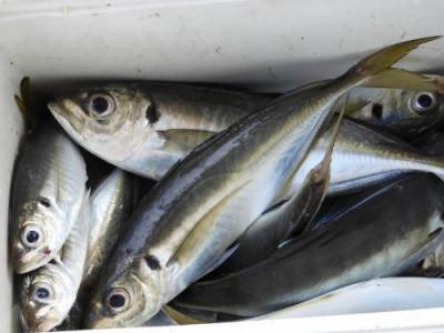 釣具の海友の2021年6月28日(月)5枚目の写真