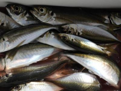 釣具の海友の2021年6月30日(水)2枚目の写真