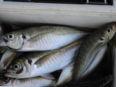 釣具の海友の2021年6月30日(水)3枚目の写真