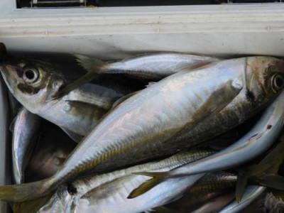 釣具の海友の2021年6月30日(水)4枚目の写真