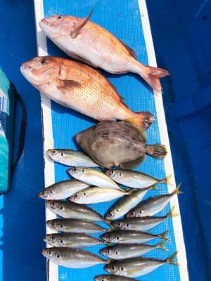船宿 秋田屋の2021年7月12日(月)1枚目の写真