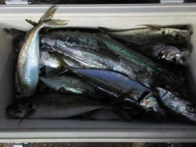 鈴木釣具店の2021年7月9日(金)3枚目の写真