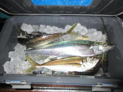 鈴木釣具店の2021年7月9日(金)4枚目の写真