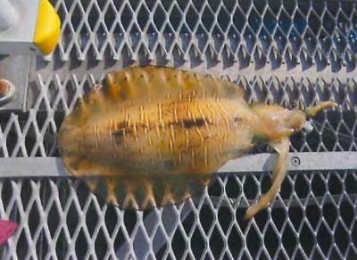 脇田海釣り桟橋の2021年6月21日(月)2枚目の写真