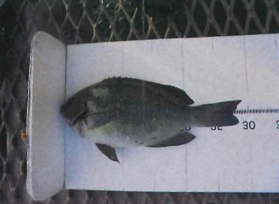 脇田海釣り桟橋の2021年6月23日(水)1枚目の写真