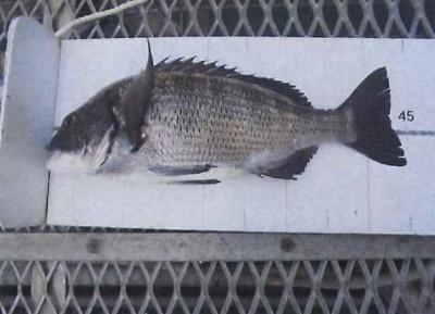 脇田海釣り桟橋の2021年6月28日(月)1枚目の写真