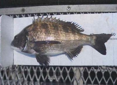 脇田海釣り桟橋の2021年6月28日(月)2枚目の写真