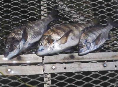 脇田海釣り桟橋の2021年6月28日(月)3枚目の写真