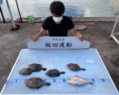 坂田渡船の2021年7月18日(日)2枚目の写真