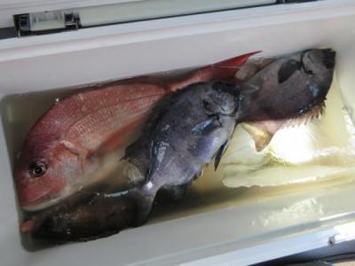 鈴木釣具店の2021年7月15日(木)1枚目の写真