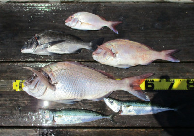 岩崎レンタルボート(岩崎つり具店)の2021年7月21日(水)1枚目の写真