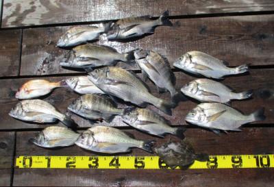 岩崎レンタルボート(岩崎つり具店)の2021年7月21日(水)3枚目の写真