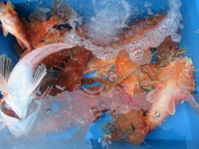 智栄丸の2021年7月25日(日)2枚目の写真