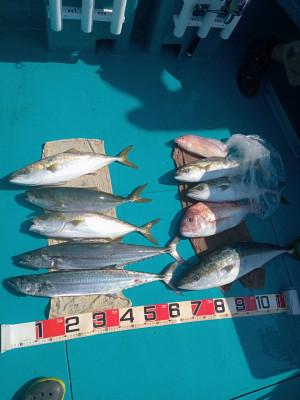 フィッシングボート 清和丸の2021年7月26日(月)4枚目の写真