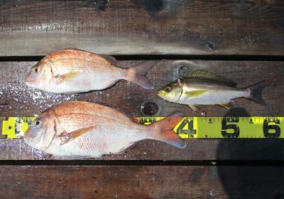 岩崎レンタルボート(岩崎つり具店)の2021年7月29日(木)3枚目の写真