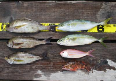 岩崎レンタルボート(岩崎つり具店)の2021年7月30日(金)3枚目の写真