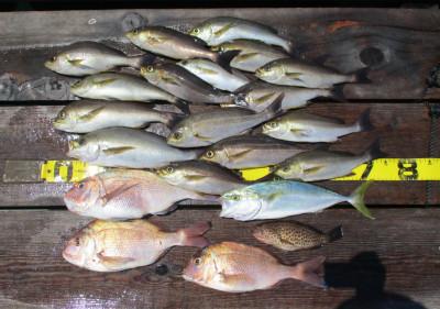 岩崎レンタルボート(岩崎つり具店)の2021年8月1日(日)1枚目の写真