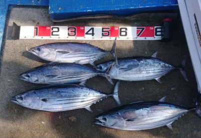 フィッシングボート 清和丸の2021年8月1日(日)4枚目の写真