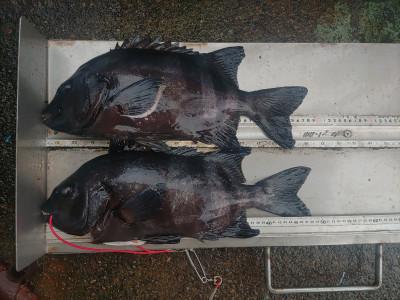 マルヒサ渡船の2021年8月13日(金)1枚目の写真