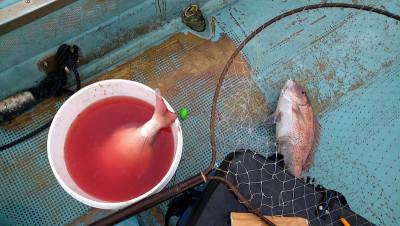 ヨシダマリンの2021年8月11日(水)2枚目の写真