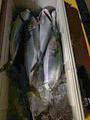 龍宮丸の2021年8月22日(日)2枚目の写真