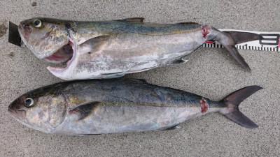 あづまや渡船の2021年8月23日(月)2枚目の写真