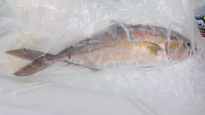 あづまや渡船の2021年8月25日(水)1枚目の写真