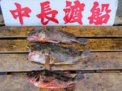 中長渡船の2021年8月28日(土)5枚目の写真