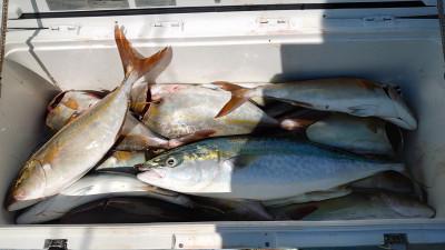 釣り船 秀進丸の2021年9月6日(月)3枚目の写真