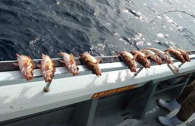 遊漁船ビックボーイの2021年9月10日(金)4枚目の写真