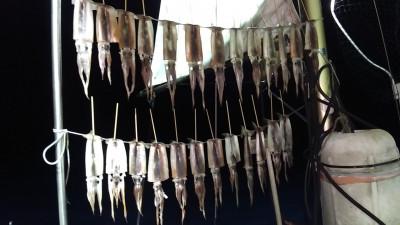 遊漁船ビックボーイの2021年9月10日(金)5枚目の写真